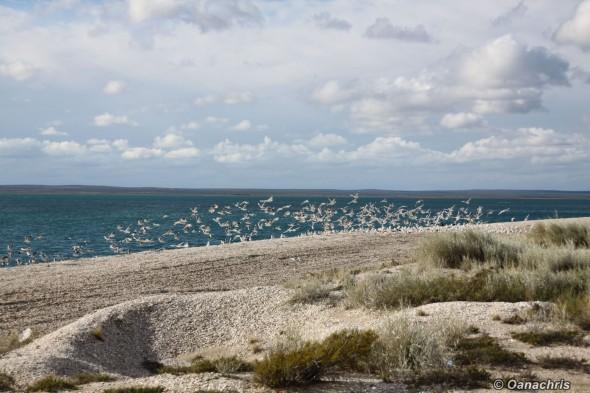 A gimpse of North Patagonia - San Antonio Este
