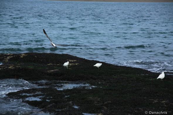 Bird watching Puerto Deseado
