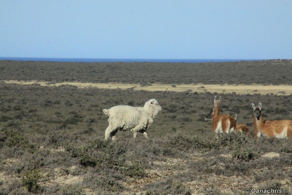 Peninsula Valdes Argentina 2