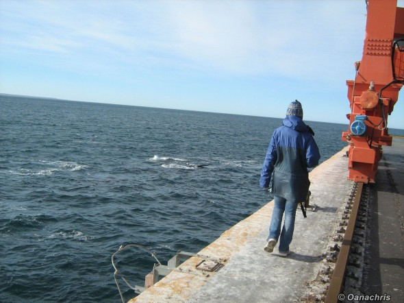 Puerto Madryn - whale watching from the pier