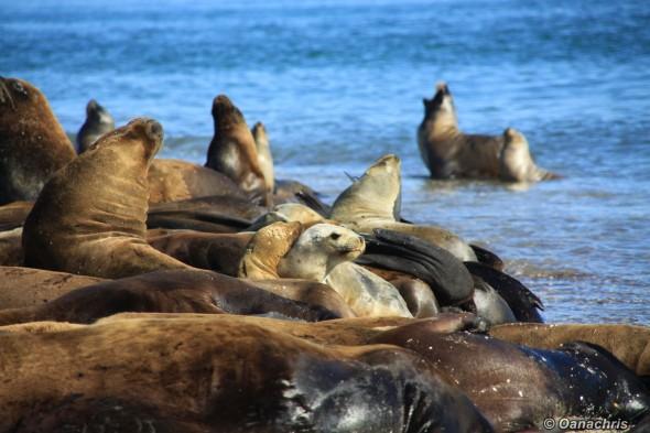 The Sea lion colony on the shores of San Antonie Este Argentina