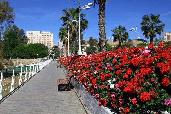 Ponte de Flores, Valencia