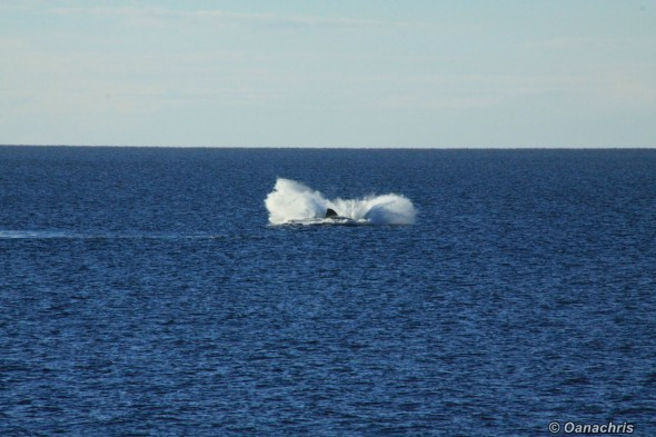 Puerto Madryn Argentina - Whale watching (11)
