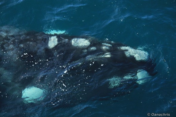 Puerto Madryn Argentina - Whale watching (32)