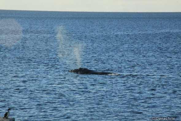 Puerto Madryn Argentina - Whale watching (7)