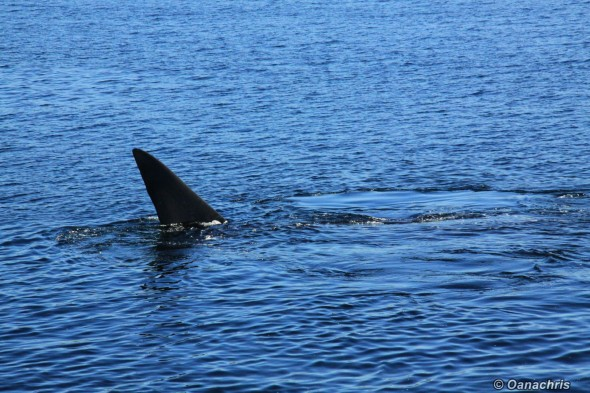 Puerto Madryn Argentina - Whale watching (8)