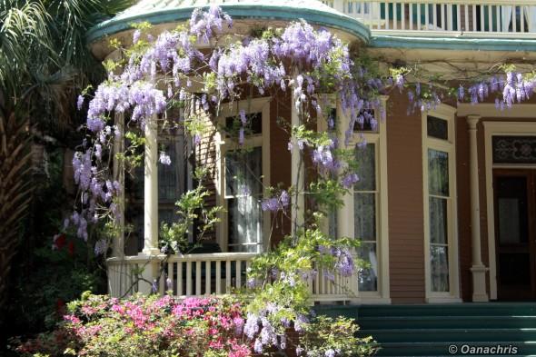 Savannah - the Garden City
