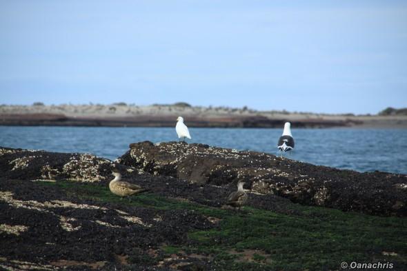 Exploring the surroundings Puerto Deseado