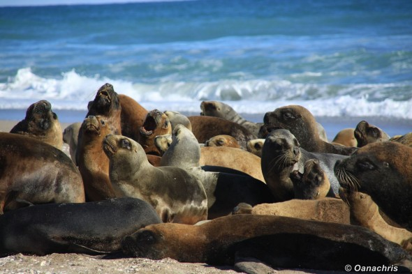 San Antonio Este Sealion colony