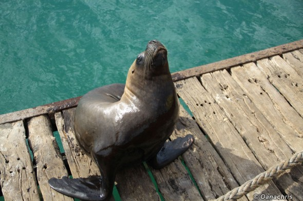 Sealion San Antonio Este port