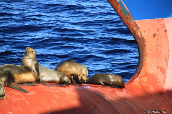 Sealions relaxing on the bulb Puerto Madryn Argentina