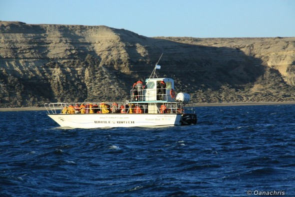 Whale watching boat Puerto Piramides