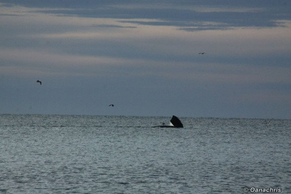 Whale watching - from Doradillo Beach Puerto Madryn