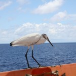 Bird having a rest on the vessel - under way to Singapore