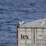 Birds having a rest in the Mediterannean Sea