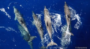 Dolphins featured image)
