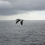 Bird watching in the Gulf of Mexico