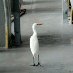 Visitor walking on deck