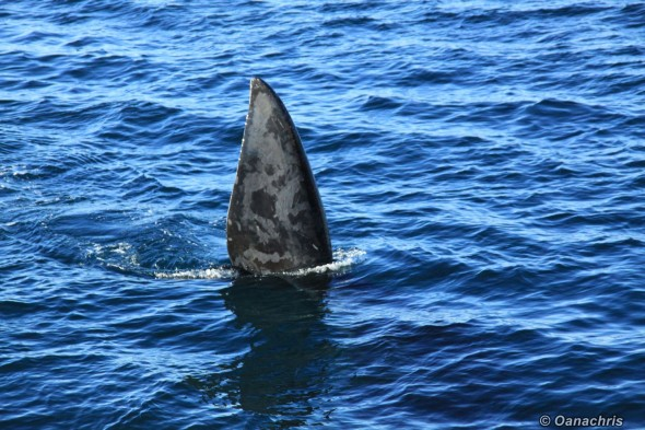 Whale watching in Golfo Nuevo