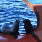 Visitors at anchorage