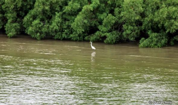 Mississippi Delta (2)