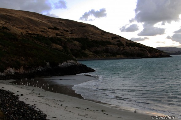 Pilot's Beach - Otago Peninsula