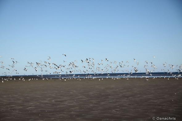 Bird watching in Patagonia, Argentina (2)