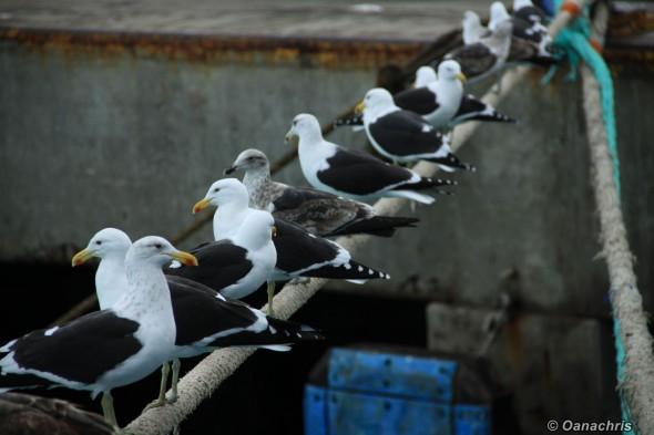 Bird watching in Patagonia, Argentina (5)