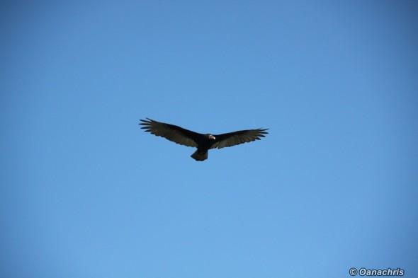 Bird watching in Patagonia, Argentina