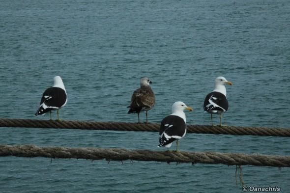 Bird watching in Patagonia, Argentina (6)