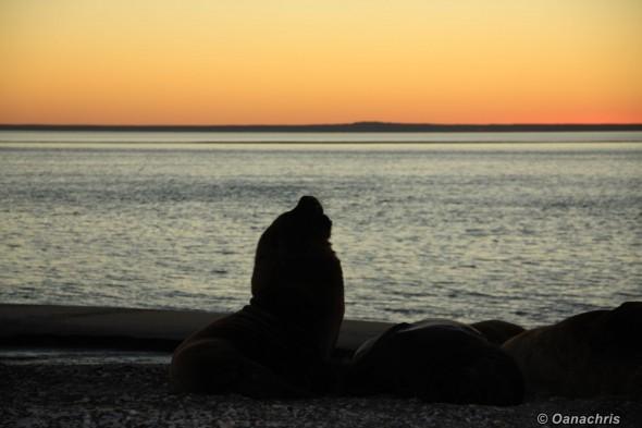 San Antonio Este, sea lions (25)
