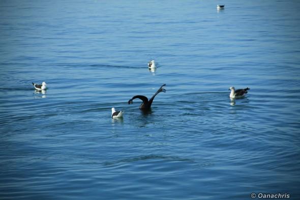 San Antonio Este, sea lions (6)