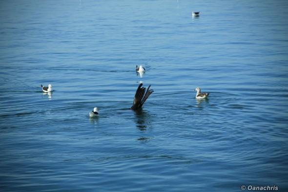 San Antonio Este, sea lions (7)