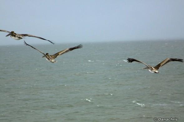Birdwatching approaching Houston