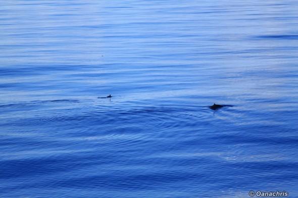 Crossing the Atlantic Ocean on board HS Debussy (3)