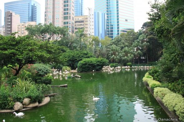 Kowloon Park (4)