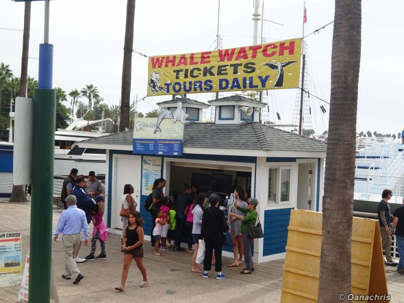 Long Beach whale watching