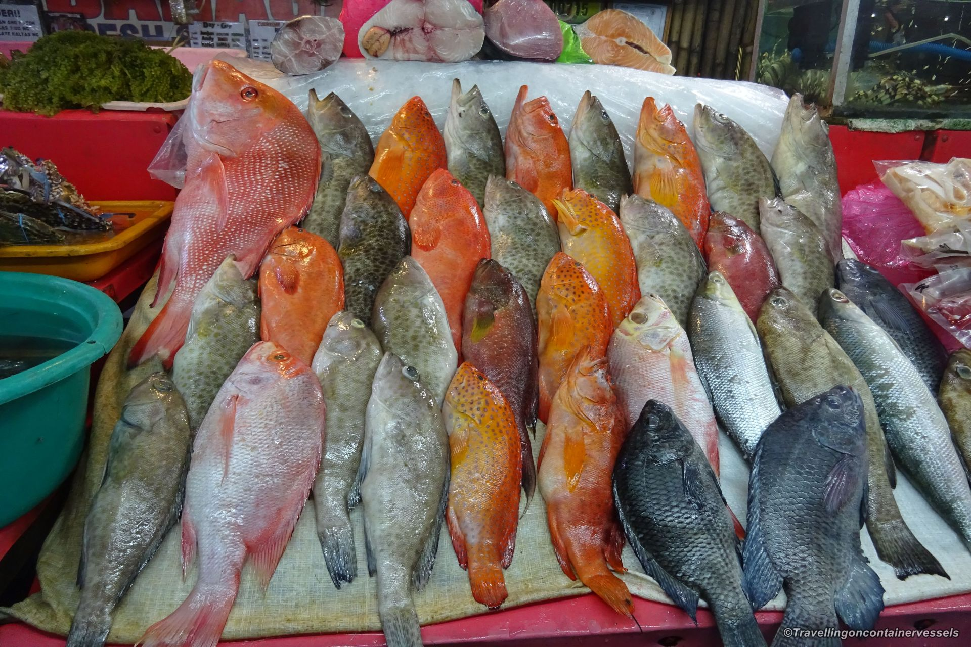Dampa fish market manila travelling on container vessels for Fish market prices